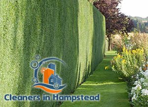 Hedge Cutting Hampstead